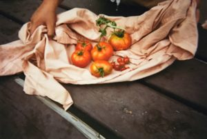 Picked tomatoes of various sizes sitting on a cloth being held by hands on both sides