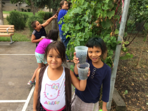 children pick grapes in a small outdoor garden