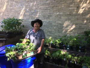 plant giveaway, a woman stands with a wheelbarrow