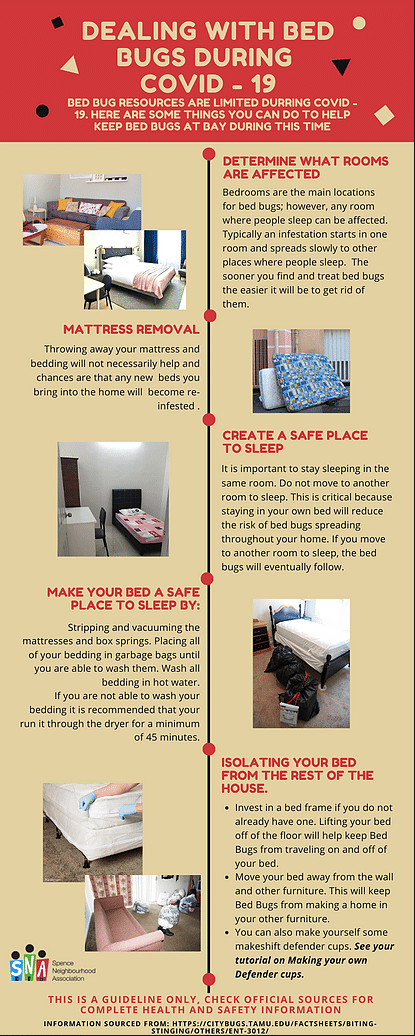 dealing with bed bugs during covid-19